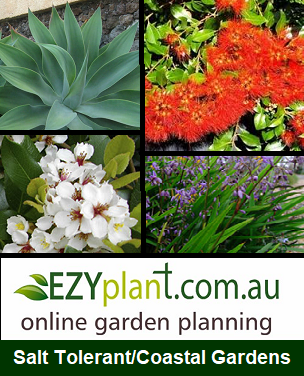 Salt tolerant coastal garden bed plans